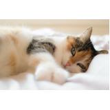 vacinar animais contra raiva Mooca