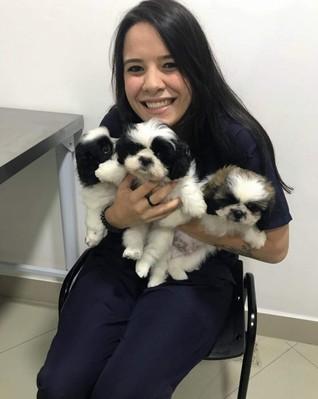Vacinação para Cachorro Filhote São Bernardo do Campo - Vacinação para Cachorro Filhote