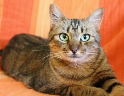 Vacinação para Gatos Mauá - Vacinar Animais contra Raiva