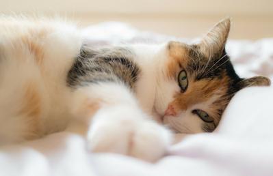 Vacinar Animais contra Raiva Tatuapé - Vacinação para Cachorro Filhote
