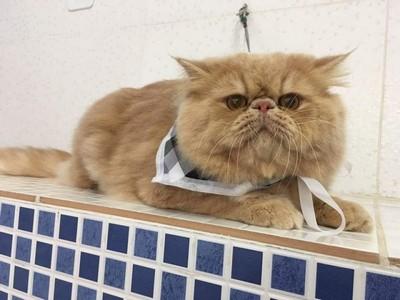 Vacinas para Animais de Estimação Mooca - Vacinação para Cães e Gatos